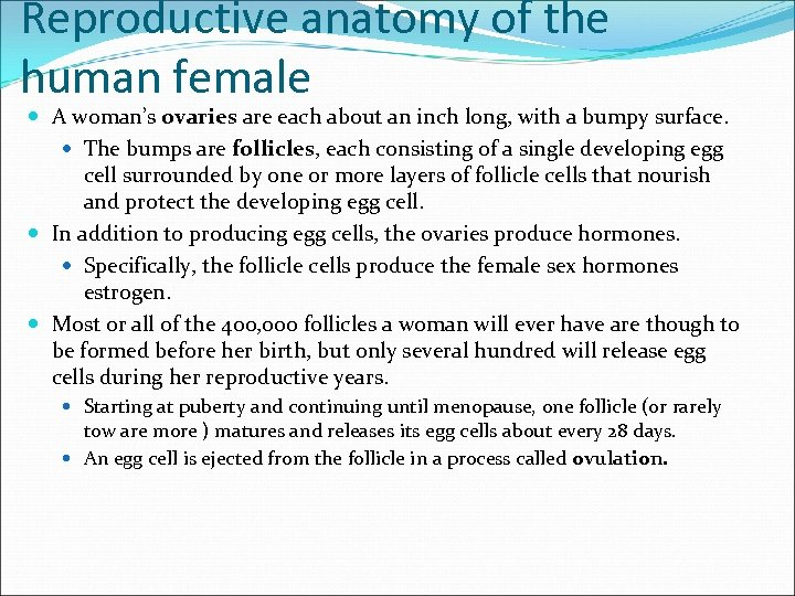 Reproductive anatomy of the human female A woman's ovaries are each about an inch