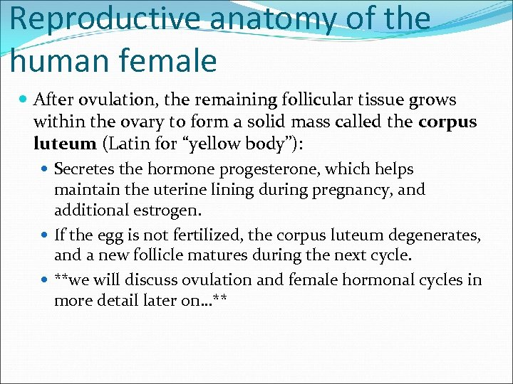 Reproductive anatomy of the human female After ovulation, the remaining follicular tissue grows within