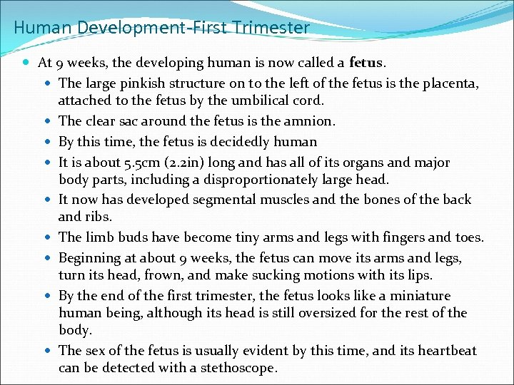 Human Development-First Trimester At 9 weeks, the developing human is now called a fetus.
