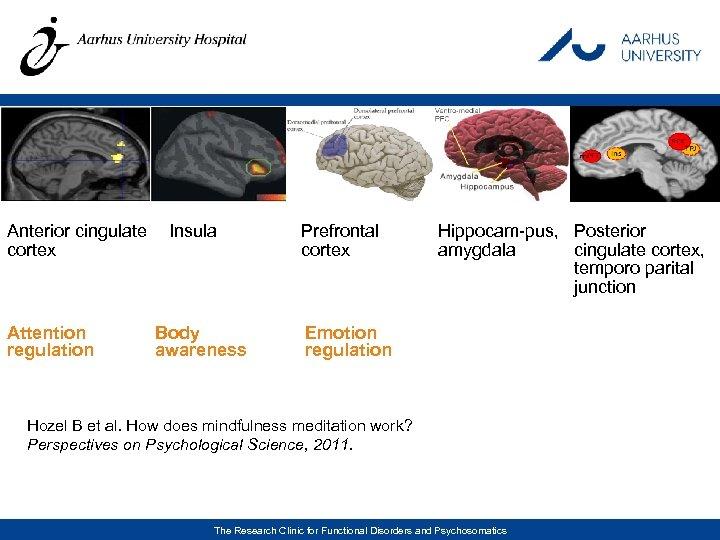 Anterior cingulate Insula cortex Attention regulation Body awareness Prefrontal cortex Hippocam-pus, Posterior amygdala cingulate