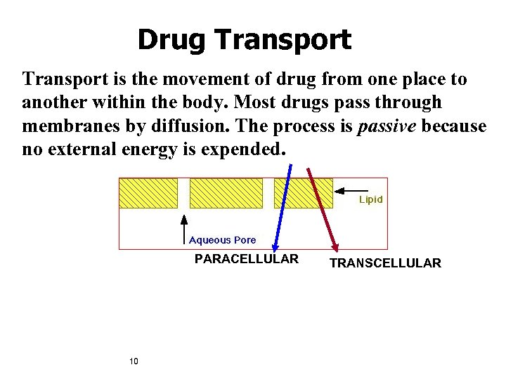 Drug Transport is the movement of drug from one place to another within the
