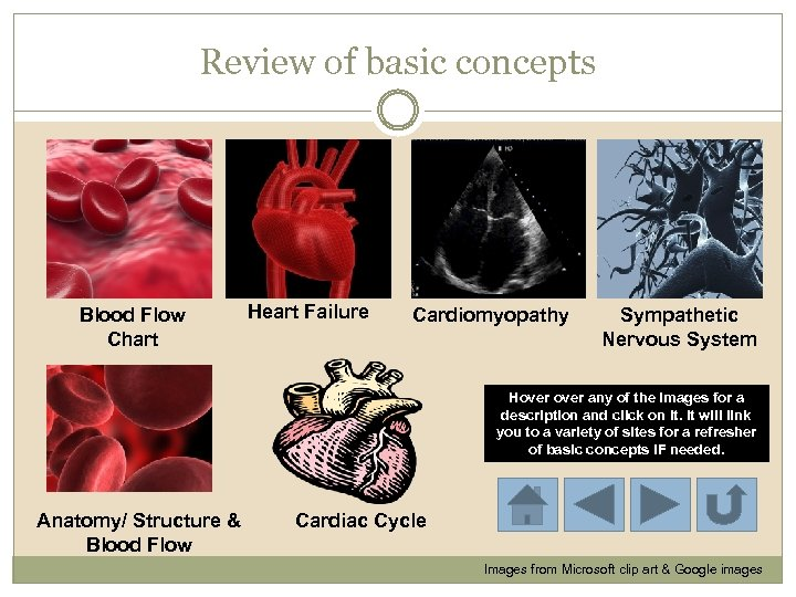 Review of basic concepts Blood Flow Chart Heart Failure Cardiomyopathy Sympathetic Nervous System Hover