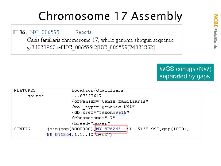 WGS contigs (NW) separated by gaps NCBI Field. Guide Chromosome 17 Assembly