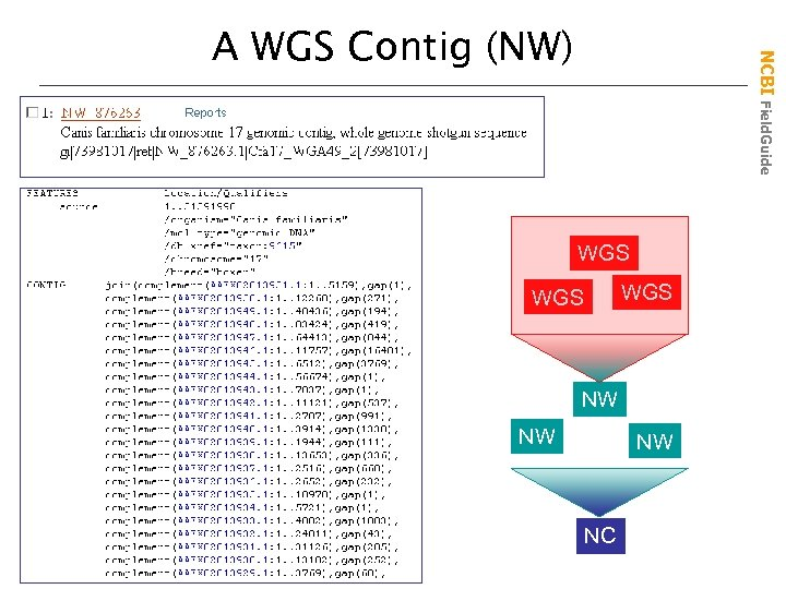 NCBI Field. Guide A WGS Contig (NW) WGS WGS NW NW NW NC