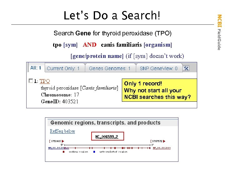 Search Gene for thyroid peroxidase (TPO) tpo [sym] AND canis familiaris [organism] [gene/protein name]