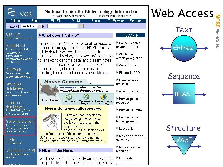 Text Entrez Sequence BLAST Structure VAST NCBI Field. Guide Web Access
