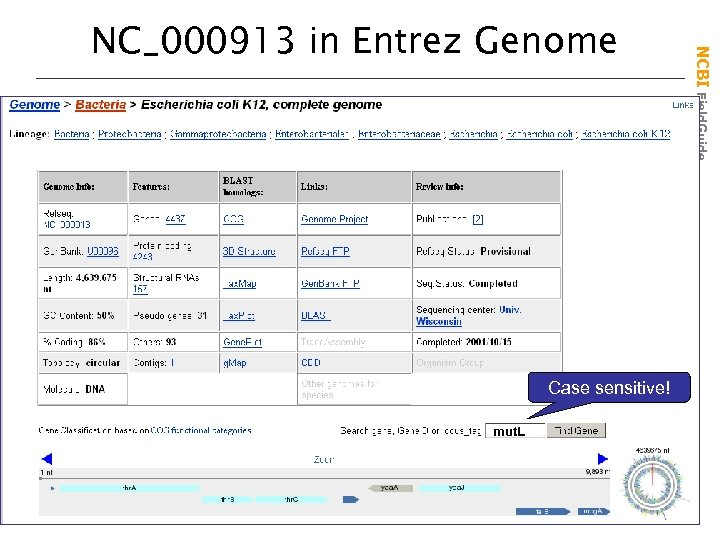 Case sensitive! mut. L NCBI Field. Guide NC_000913 in Entrez Genome