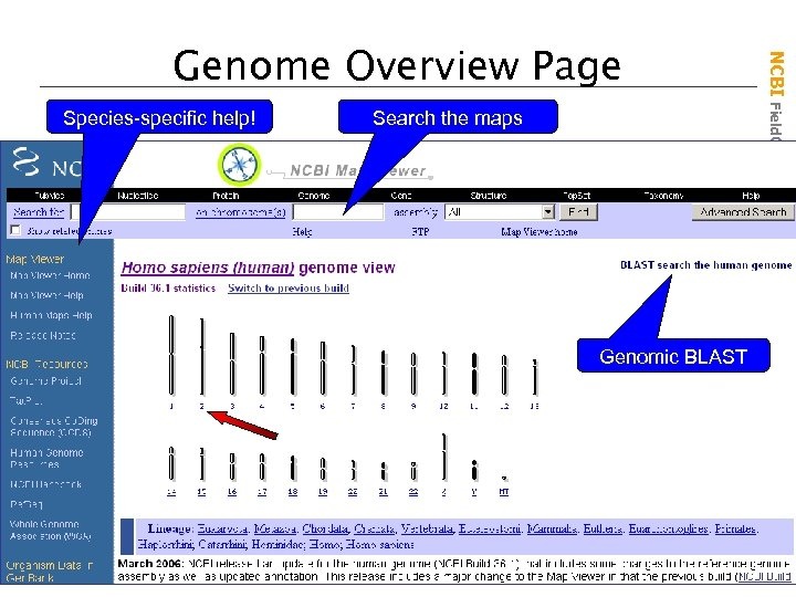 Species-specific help! Search the maps Genomic BLAST NCBI Field. Guide Genome Overview Page