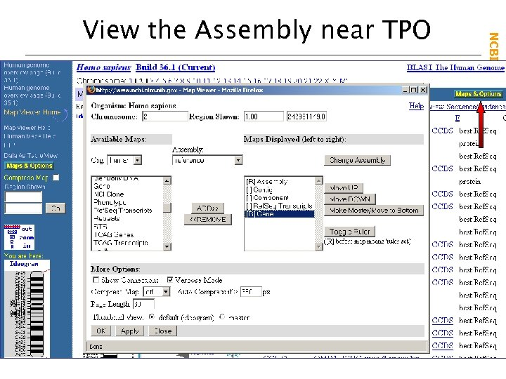 NCBI Field. Guide View the Assembly near TPO