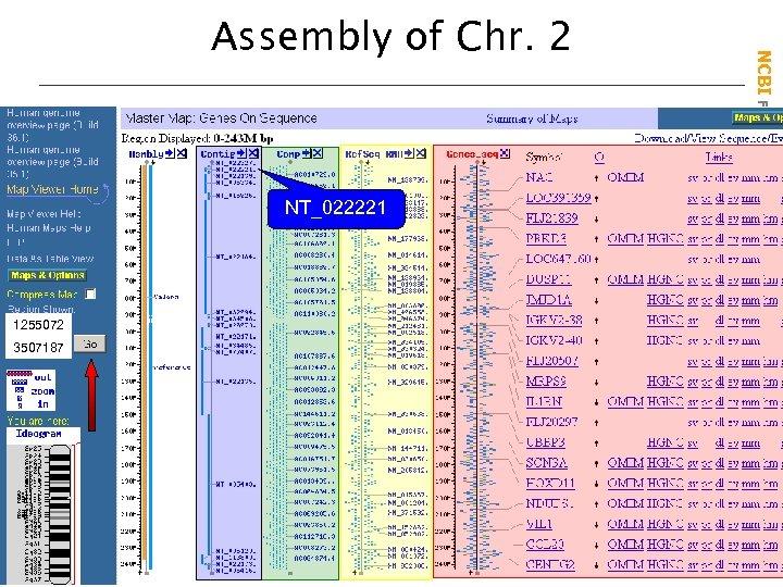 NT_022221 1255072 3507187 NCBI Field. Guide Assembly of Chr. 2