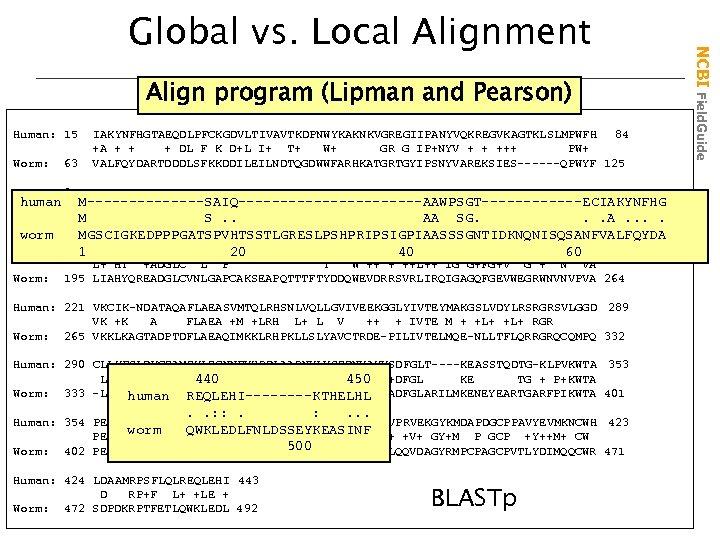 Align program (Lipman and Pearson) Human: 15 63 IAKYNFHGTAEQDLPFCKGDVLTIVAVTKDPNWYKAKNKVGREGIIPANYVQKREGVKAGTKLSLMPWFH 84 +A + + +