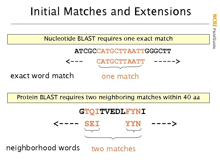 Nucleotide BLAST requires one exact match ATCGCCATGCTTAATTGGGCTT <--CATGCTTAATT -----> exact word match one match