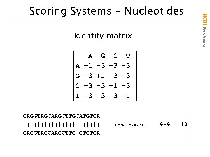 Identity matrix A G C T A +1 – 3 – 3 G –