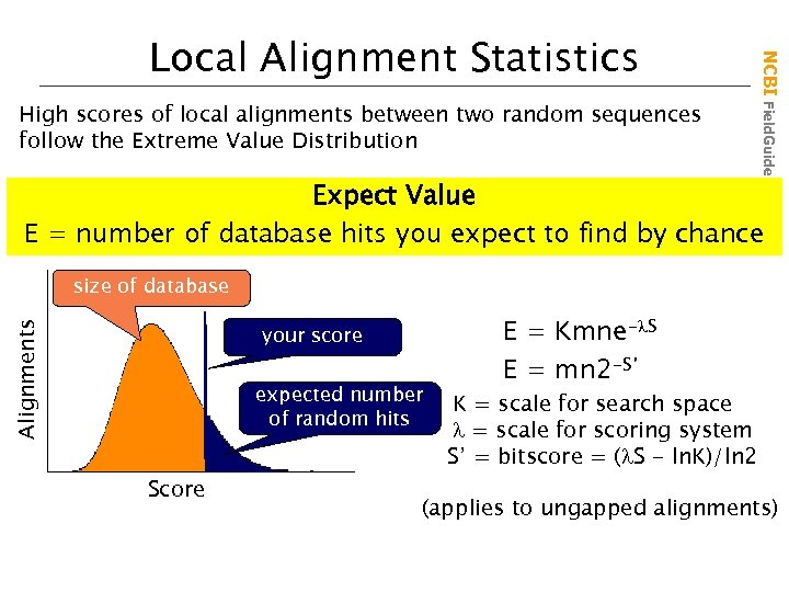 High scores of local alignments between two random sequences follow the Extreme Value Distribution