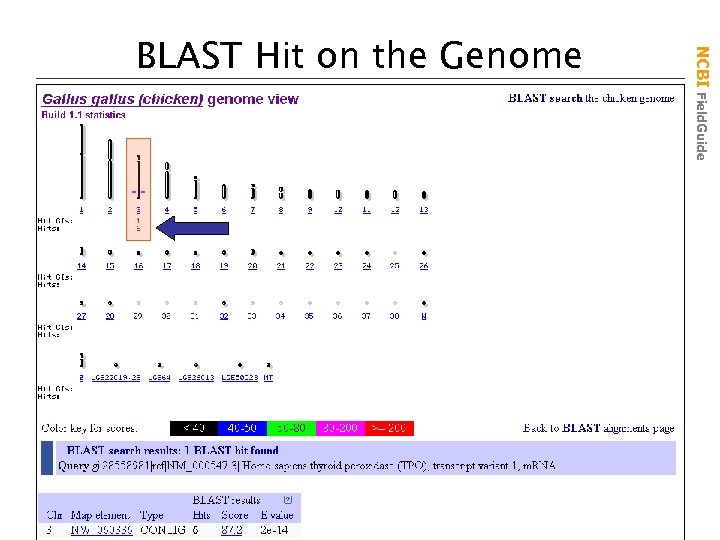 NCBI Field. Guide BLAST Hit on the Genome