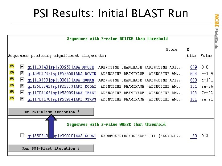 NCBI Field. Guide PSI Results: Initial BLAST Run