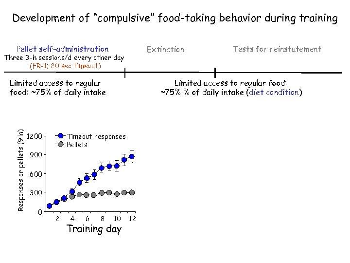 "Development of ""compulsive"" food-taking behavior during training Pellet self-administration Extinction Three 3 -h sessions/d"