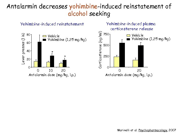 Antalarmin decreases yohimbine-induced reinstatement of alcohol seeking 80 60 40 20 0 Vehicle Yohimbine
