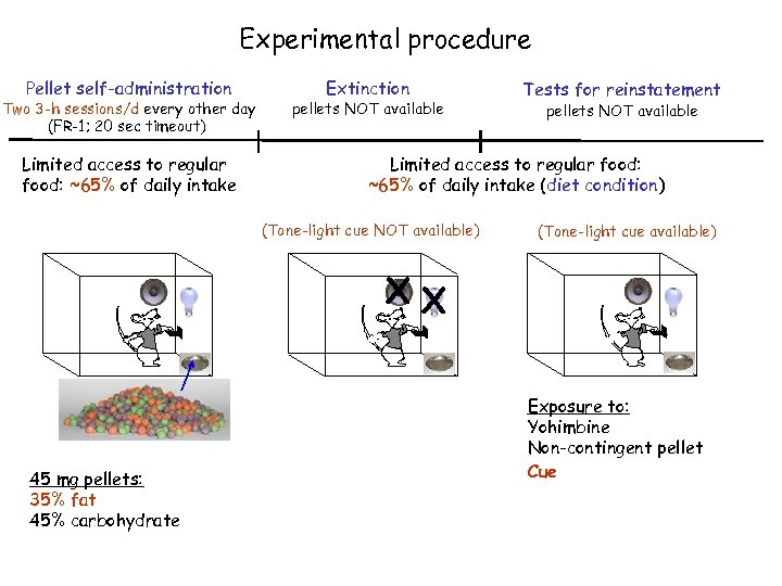 Experimental procedure Pellet self-administration Two 3 -h sessions/d every other day (FR-1; 20 sec