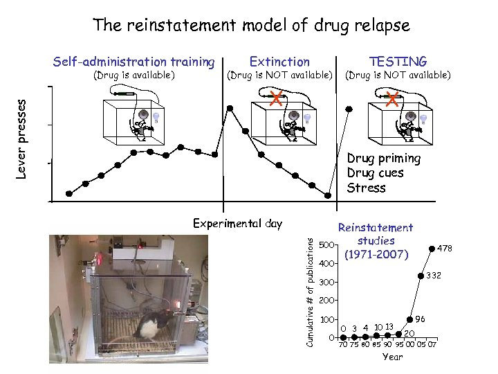 The reinstatement model of drug relapse Self-administration training (Drug is NOT available) X TESTING