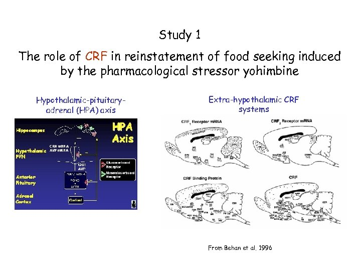 Study 1 The role of CRF in reinstatement of food seeking induced by the