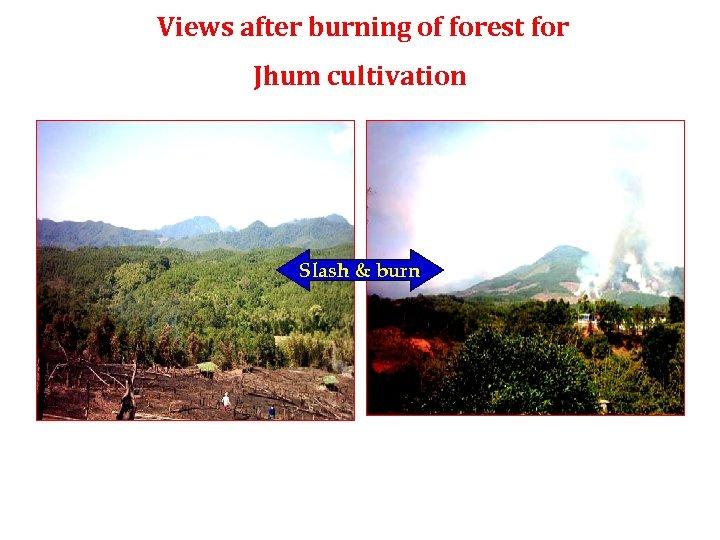 Views after burning of forest for Jhum cultivation Slash & burn