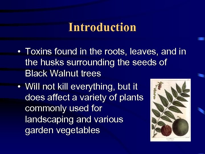 Introduction • Toxins found in the roots, leaves, and in the husks surrounding the
