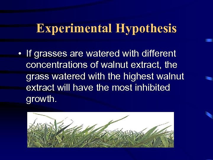 Experimental Hypothesis • If grasses are watered with different concentrations of walnut extract, the