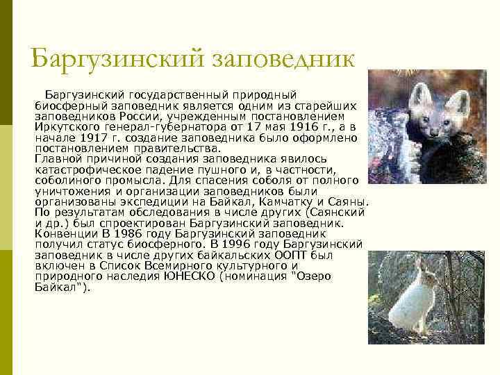 Баргузинский заповедник Баргузинский государственный природный биосферный заповедник является одним из старейших заповедников России, учрежденным