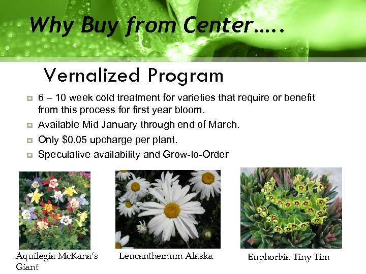 Why Buy from Center…. . Vernalized Program 6 – 10 week cold treatment for