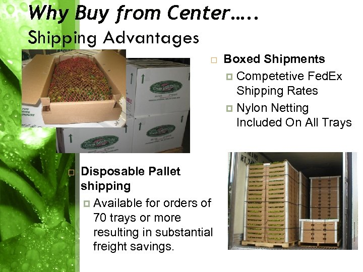Why Buy from Center…. . Shipping Advantages Disposable Pallet shipping Available for orders of