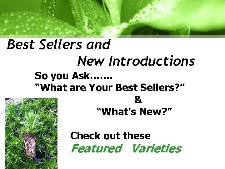 "Best Sellers and New Introductions So you Ask……. ""What are Your Best Sellers? """