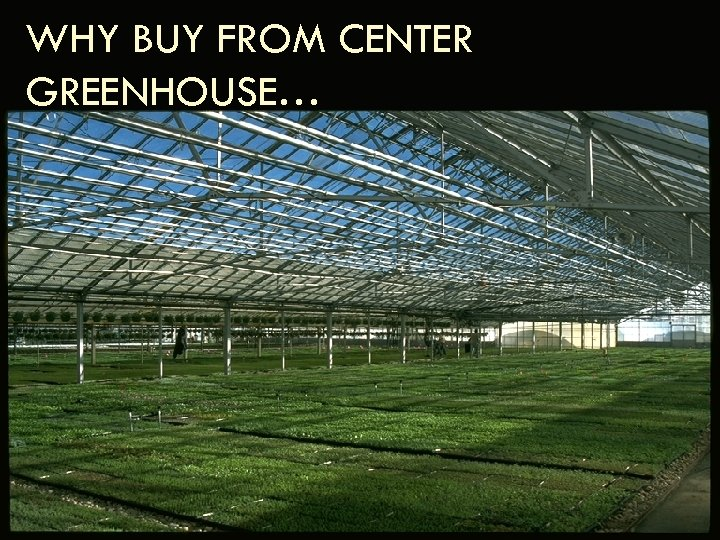 WHY BUY FROM CENTER GREENHOUSE…
