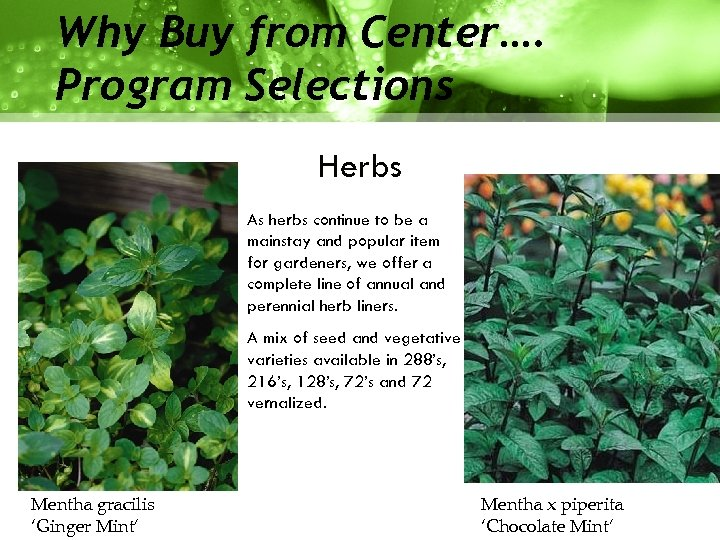 Why Buy from Center…. Program Selections Herbs As herbs continue to be a mainstay