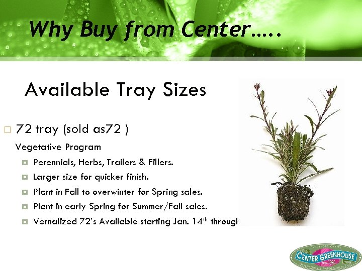 Why Buy from Center…. . Available Tray Sizes 72 tray (sold as 72 )