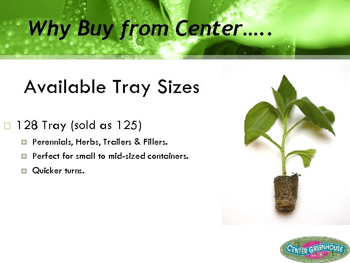 Why Buy from Center…. . Available Tray Sizes 128 Tray (sold as 125) Perennials,