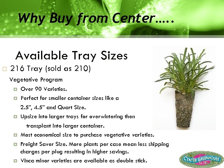 Why Buy from Center…. . Available Tray Sizes 216 Tray (sold as 210) Vegetative