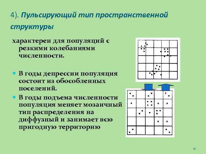 4). Пульсирующий тип пространственной структуры характерен для популяций с резкими колебаниями численности. В годы