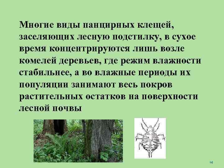 Многие виды панцирных клещей, заселяющих лесную подстилку, в сухое время концентрируются лишь возле комелей