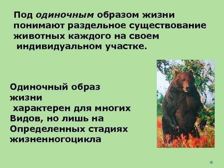 Под одиночным образом жизни понимают раздельное существование животных каждого на своем индивидуальном участке. Одиночный
