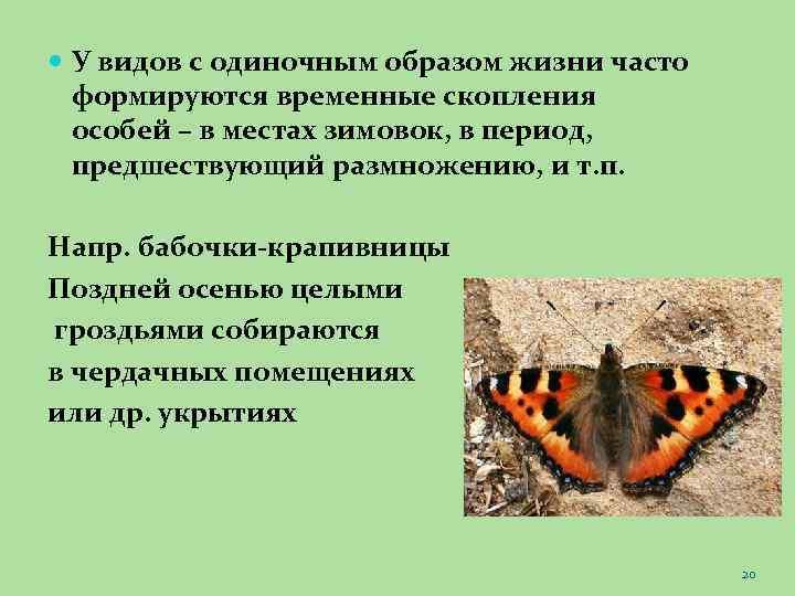 У видов с одиночным образом жизни часто формируются временные скопления особей – в