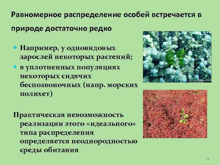 Равномерное распределение особей встречается в природе достаточно редко Например, у одновидовых зарослей некоторых растений;