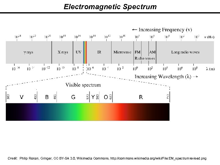 Electromagnetic Spectrum Credit: Philip Ronan, Gringer, CC BY-SA 3. 0, Wikimedia Commons, http: //commons.
