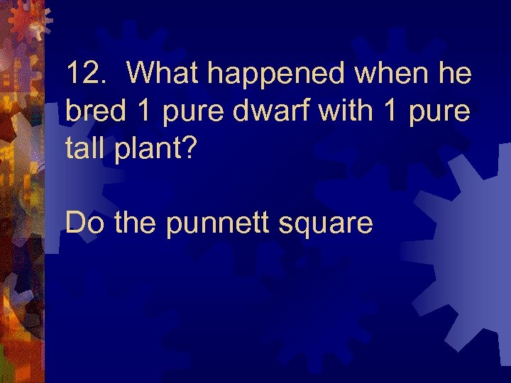 12. What happened when he bred 1 pure dwarf with 1 pure tall plant?