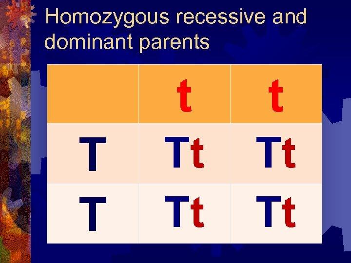 Homozygous recessive and dominant parents t T T t Tt Tt