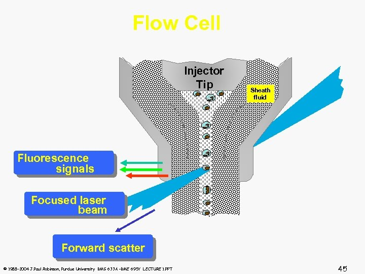 Flow Cell Injector Tip Sheath fluid Fluorescence signals Focused laser beam Forward scatter ©