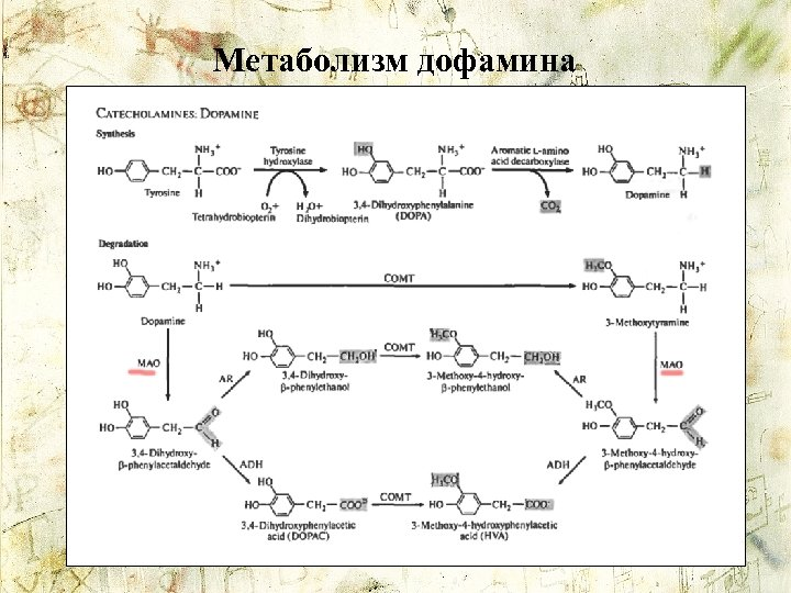 Метаболизм дофамина