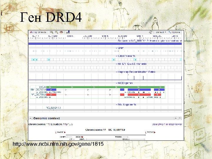 Ген DRD 4 http: //www. ncbi. nlm. nih. gov/gene/1815