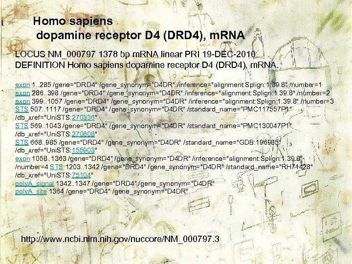 Homo sapiens dopamine receptor D 4 (DRD 4), m. RNA LOCUS NM_000797 1378 bp