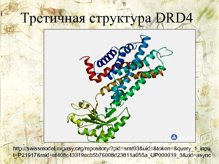 Третичная структура DRD 4 http: //swissmodel. expasy. org/repository/? pid=smr 03&uid=&token=&query_1_inpu t=P 21917&mid=ef 408 c